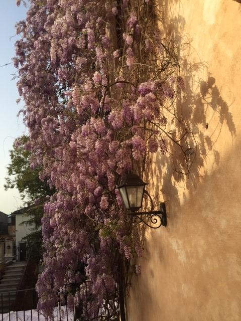 Civita Castellana - Blommor